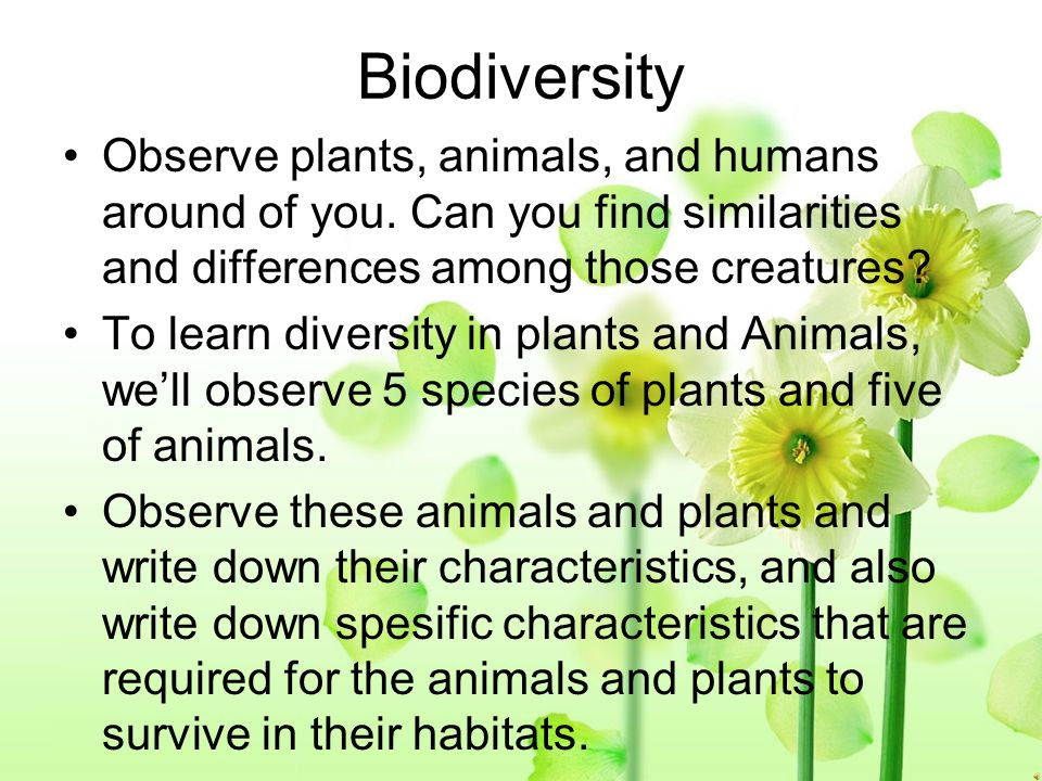 Biodiversity Observe plants, animals, and humans around of you. Can you find similarities and differences among those creatures