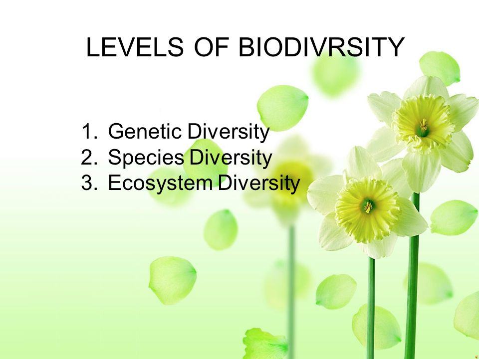 LEVELS OF BIODIVRSITY Genetic Diversity Species Diversity
