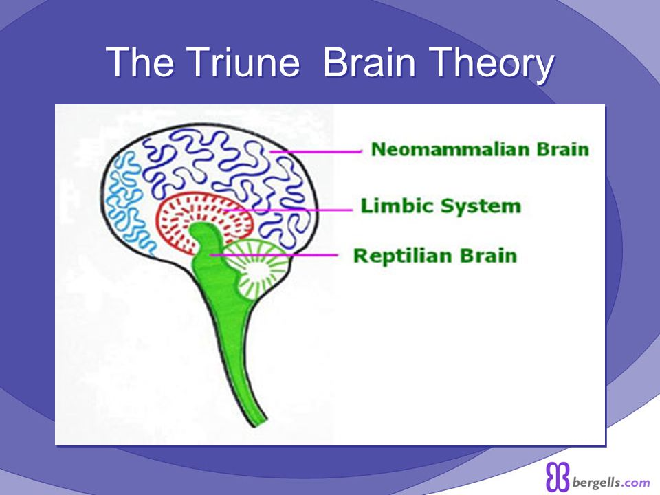 The Triune Brain Theory