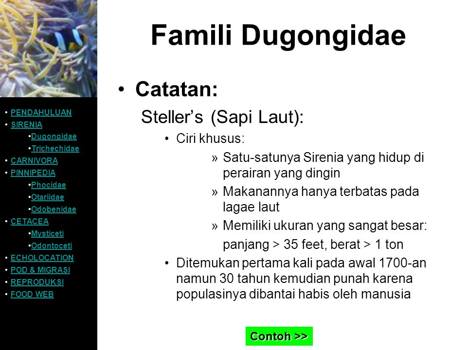 Famili Dugongidae Catatan: Steller's (Sapi Laut): Ciri khusus: