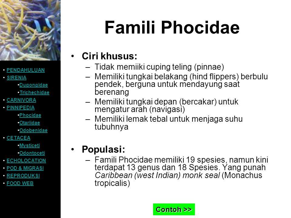 Famili Phocidae Ciri khusus: Populasi: