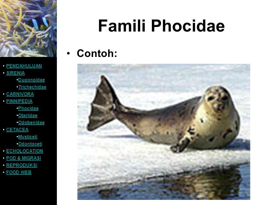 Famili Phocidae Contoh: PENDAHULUAN SIRENIA Dugongidae Trichechidae