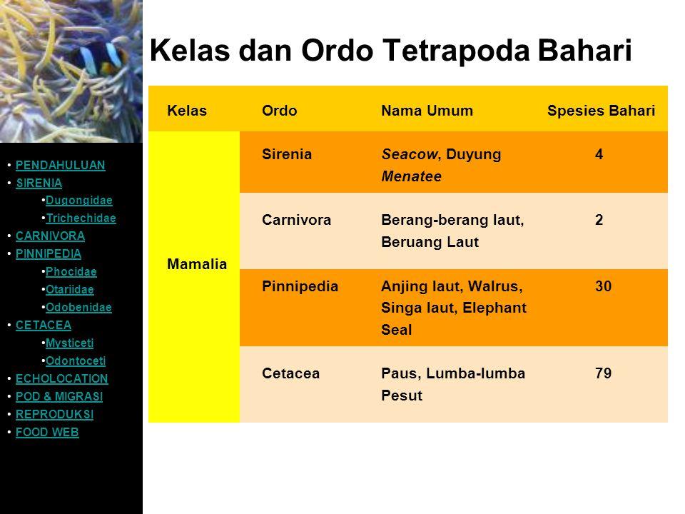 Kelas dan Ordo Tetrapoda Bahari