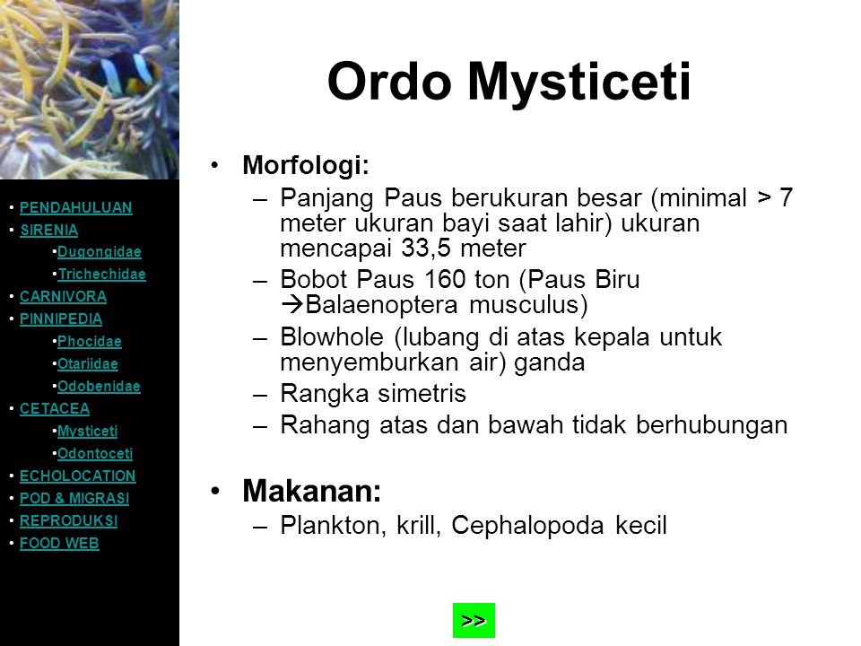 Ordo Mysticeti Makanan: Morfologi: