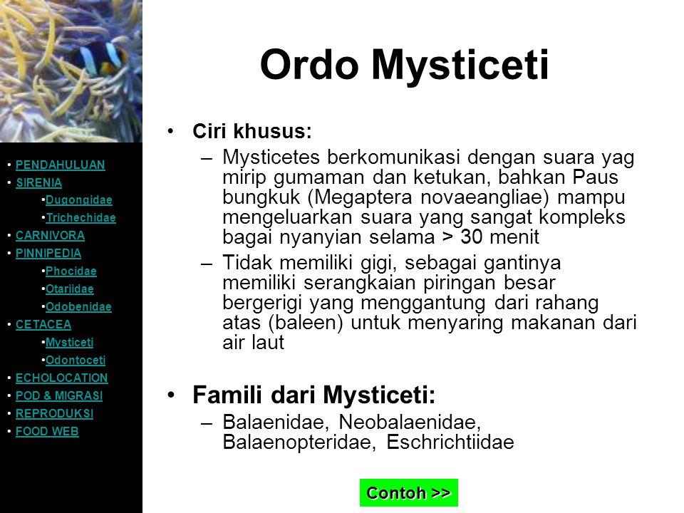 Ordo Mysticeti Famili dari Mysticeti: Ciri khusus: