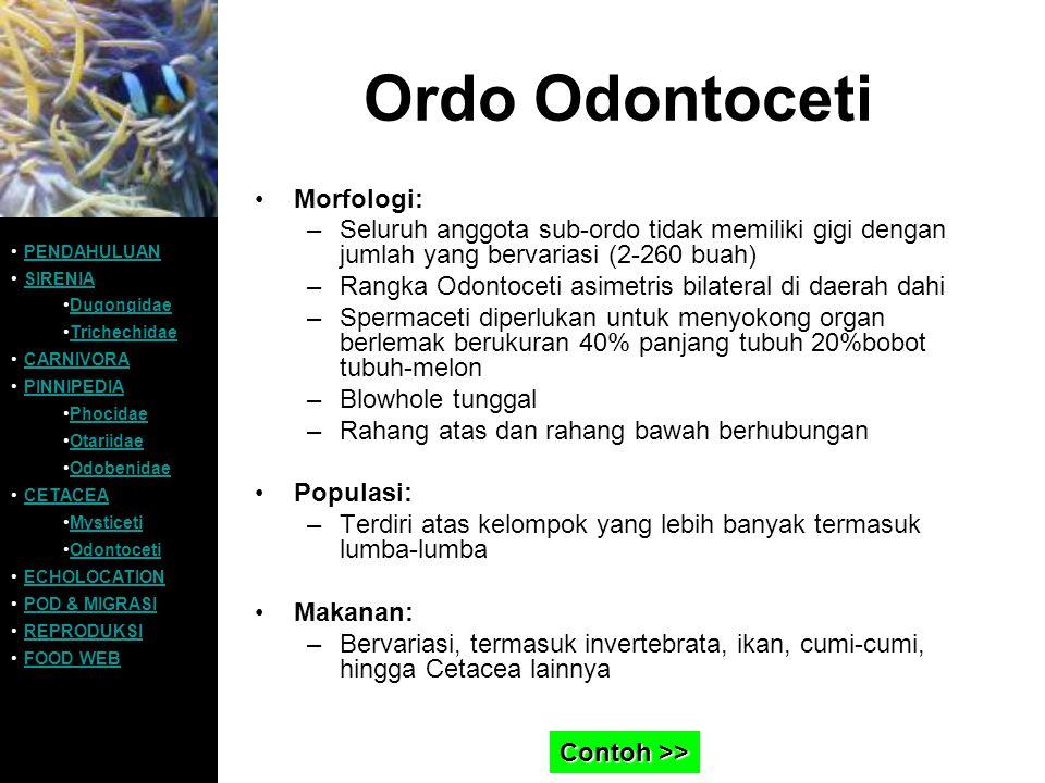 Ordo Odontoceti Morfologi: