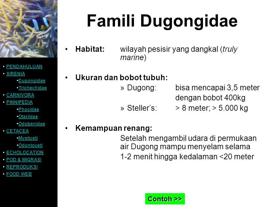 Famili Dugongidae Habitat: wilayah pesisir yang dangkal (truly marine)