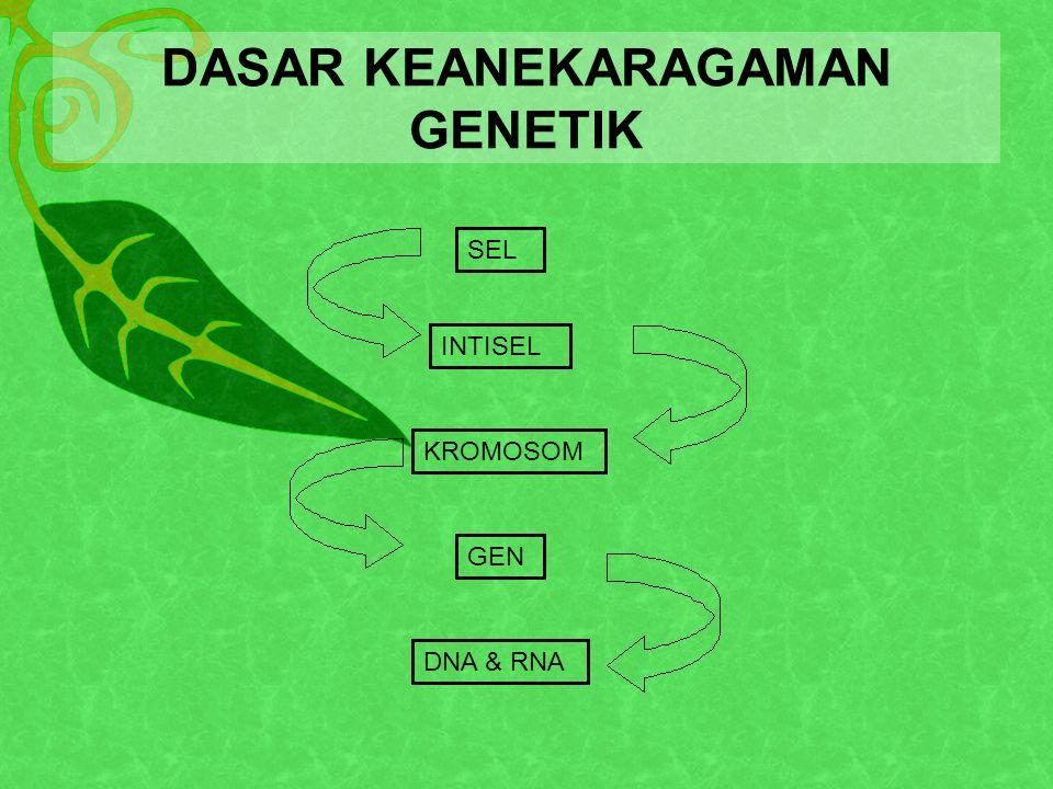 DASAR KEANEKARAGAMAN GENETIK