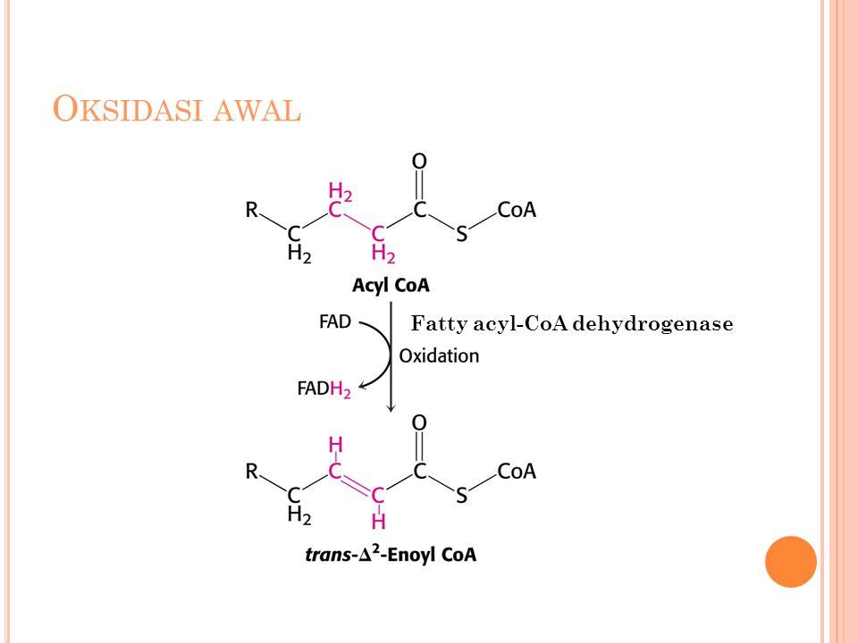 Oksidasi awal Fatty acyl-CoA dehydrogenase