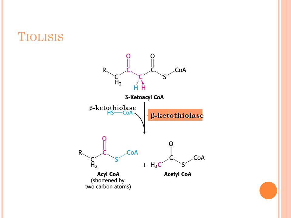 Tiolisis -ketothiolase -ketothiolase