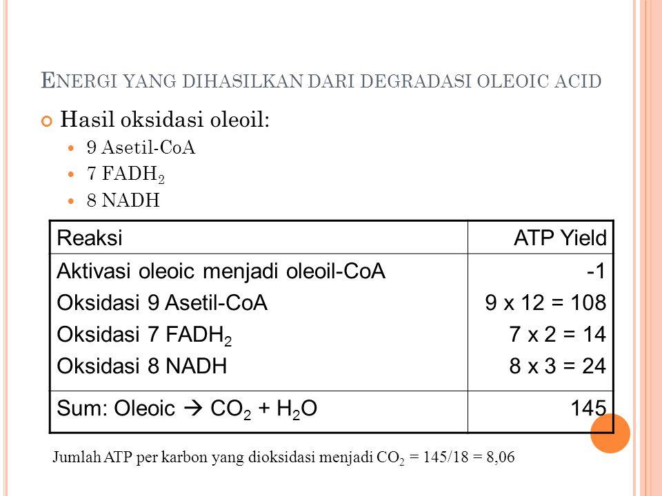 Energi yang dihasilkan dari degradasi oleoic acid