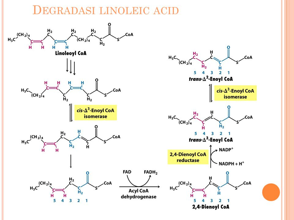 Degradasi linoleic acid