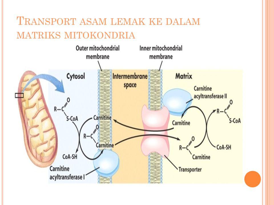 Transport asam lemak ke dalam matriks mitokondria