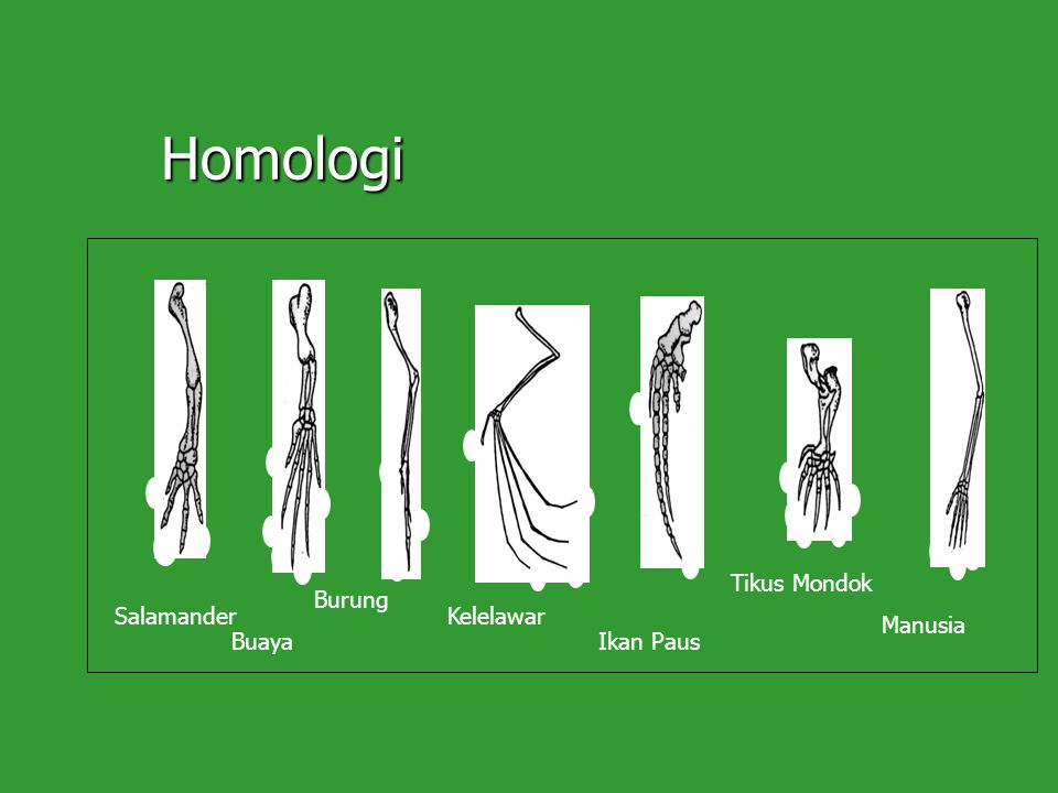 Homologi Tikus Mondok Burung Salamander Kelelawar Manusia Buaya