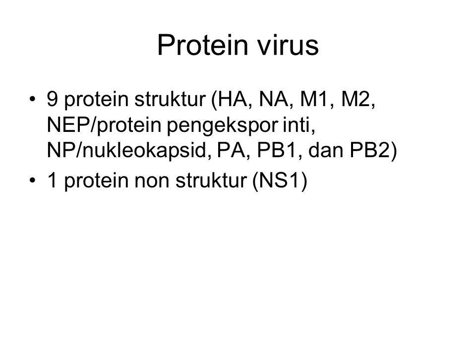 Protein virus 9 protein struktur (HA, NA, M1, M2, NEP/protein pengekspor inti, NP/nukleokapsid, PA, PB1, dan PB2)