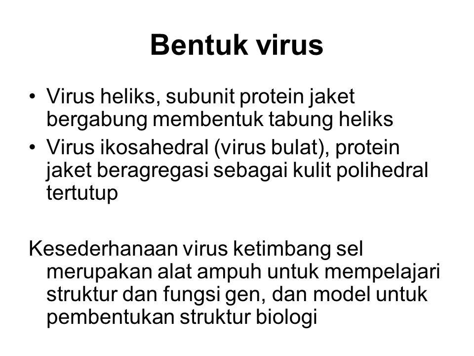 Bentuk virus Virus heliks, subunit protein jaket bergabung membentuk tabung heliks.