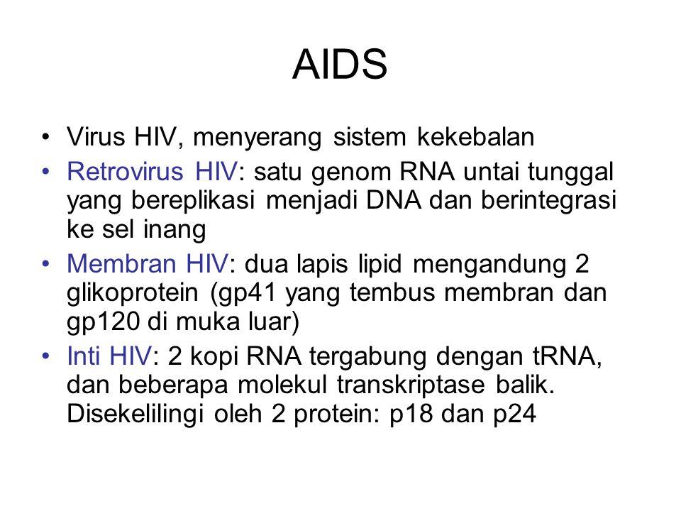 AIDS Virus HIV, menyerang sistem kekebalan