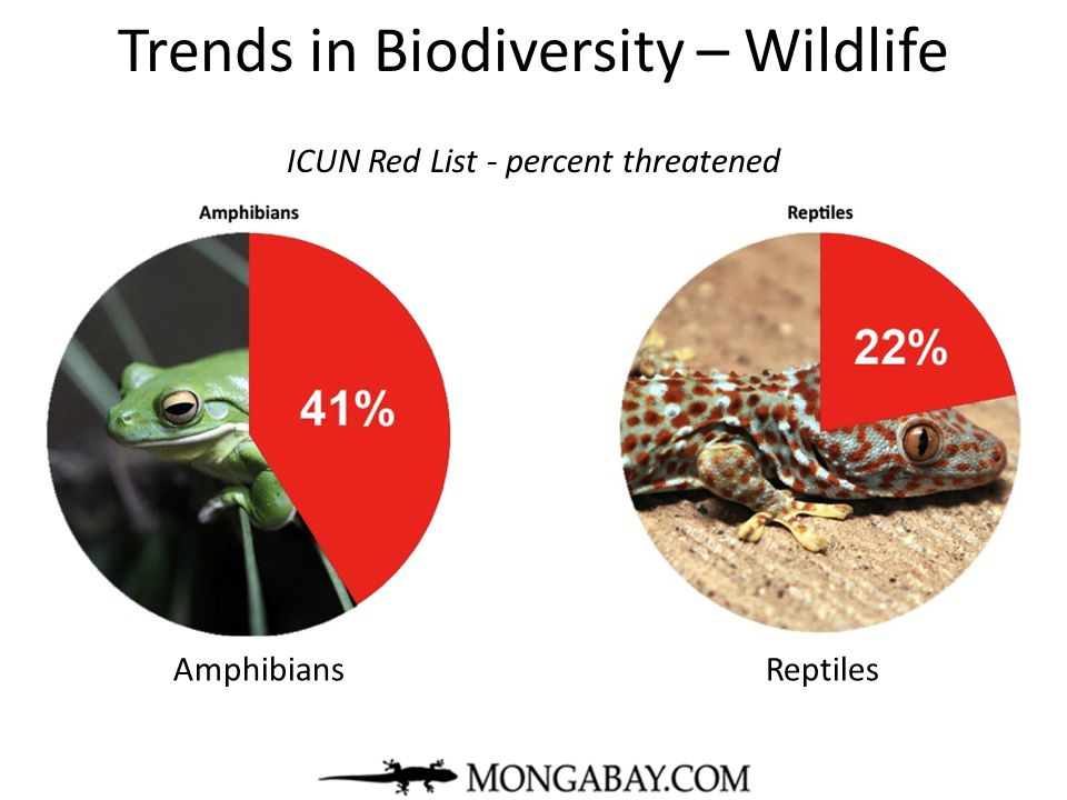 Trends in Biodiversity – Wildlife