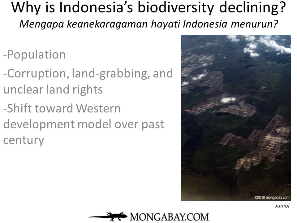 Why is Indonesia's biodiversity declining