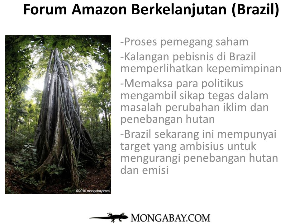 Forum Amazon Berkelanjutan (Brazil)
