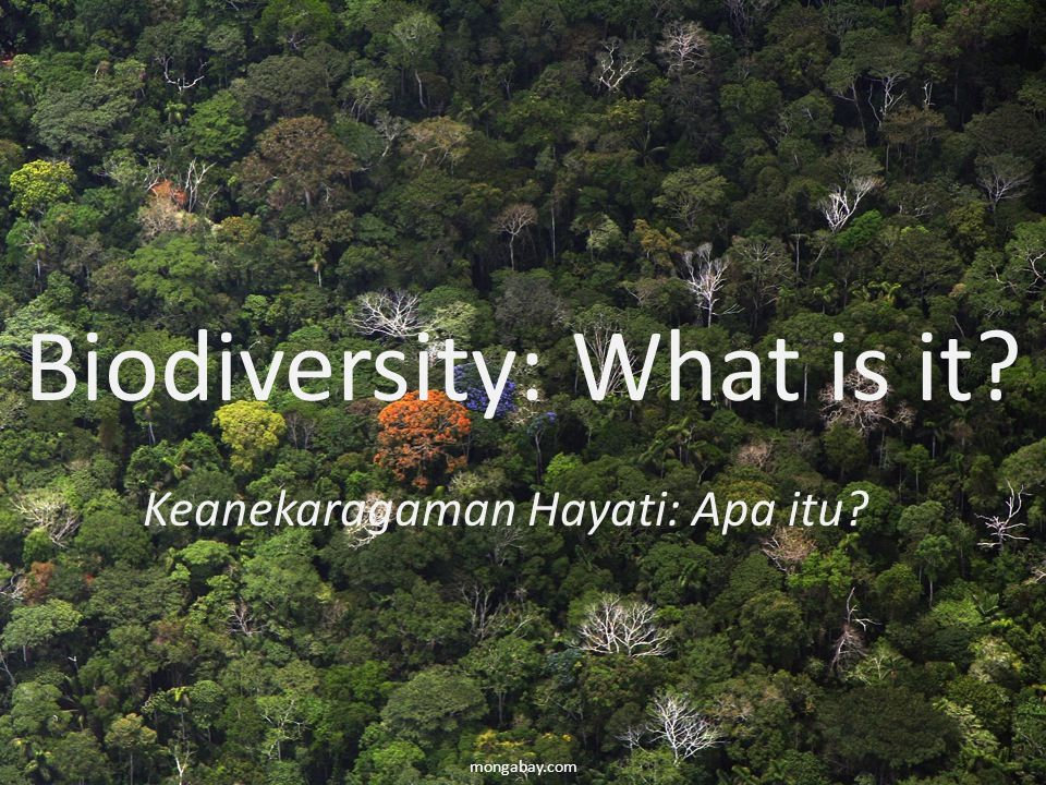 Biodiversity: What is it