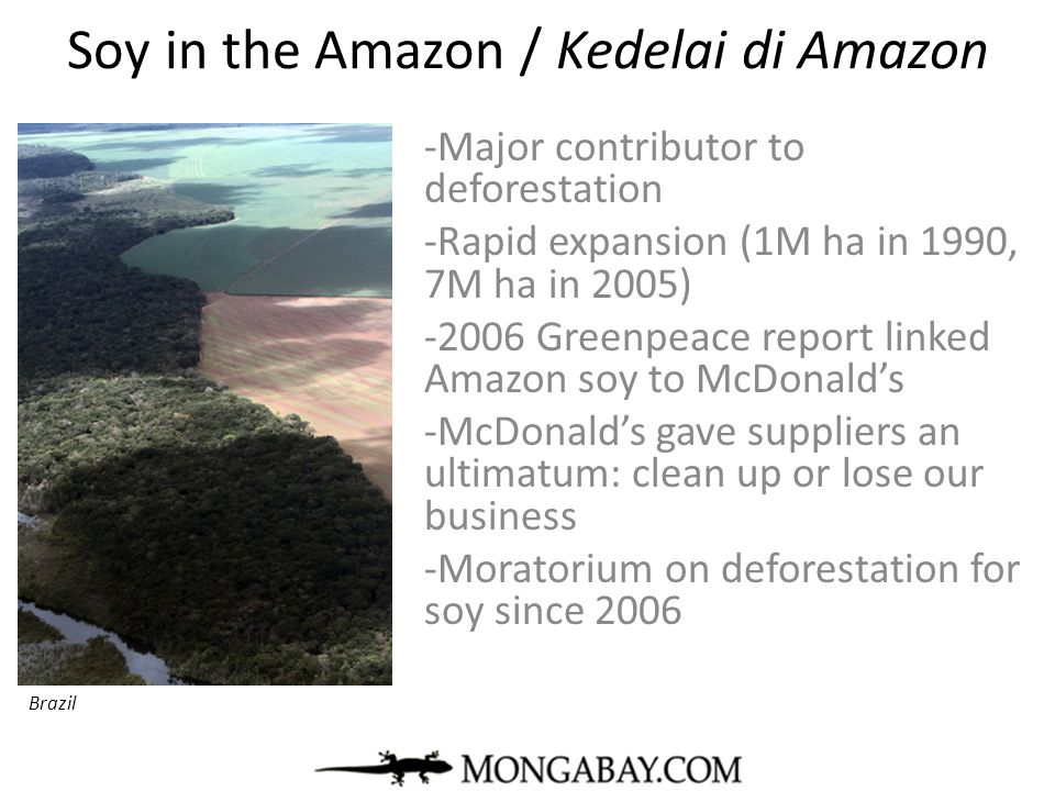 Soy in the Amazon / Kedelai di Amazon