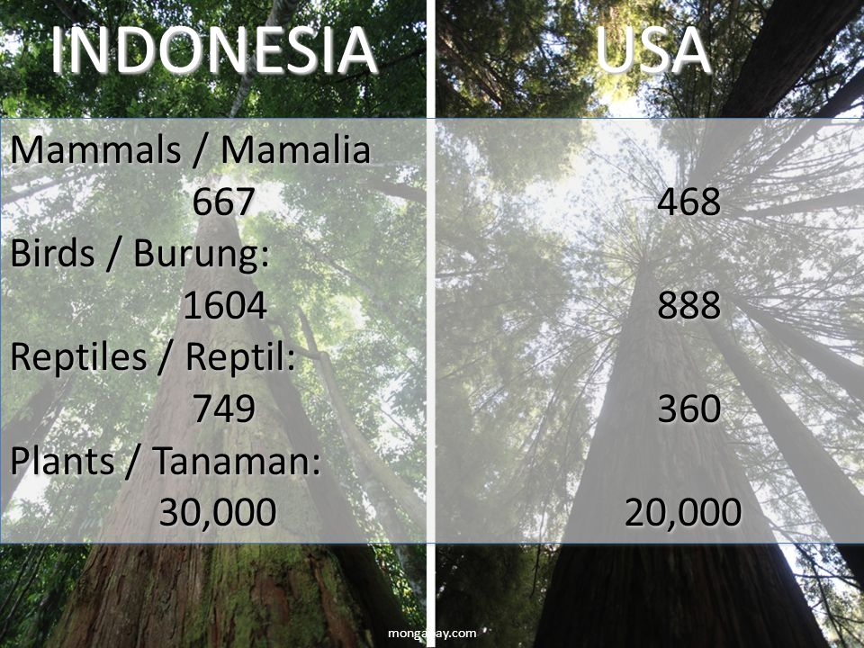 INDONESIA USA Mammals / Mamalia 667 468 Birds / Burung: 1604 888