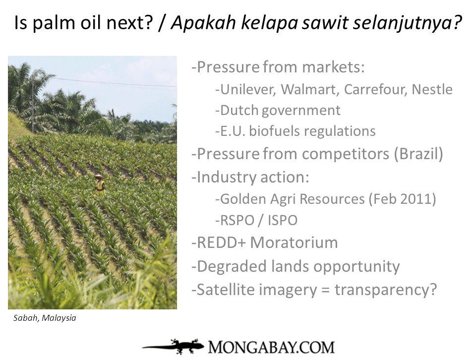 Is palm oil next / Apakah kelapa sawit selanjutnya