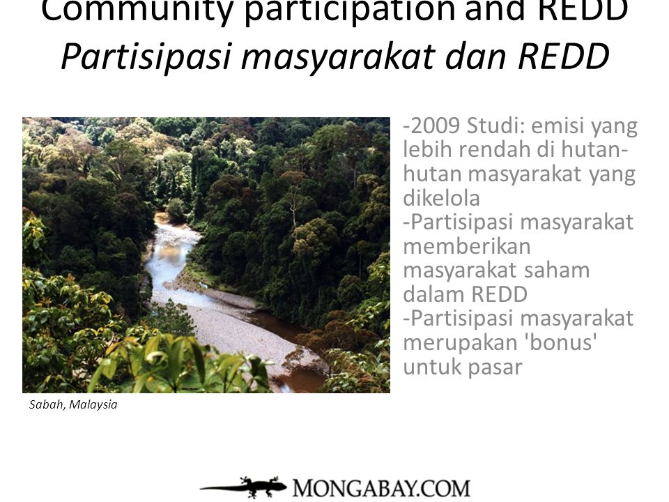 Community participation and REDD Partisipasi masyarakat dan REDD