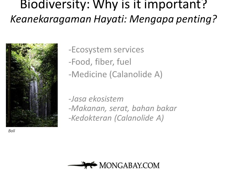 Biodiversity: Why is it important