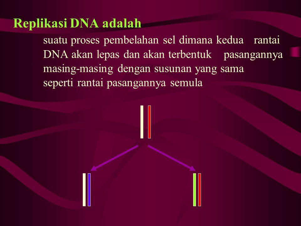 Replikasi DNA adalah. suatu proses pembelahan sel dimana kedua. rantai