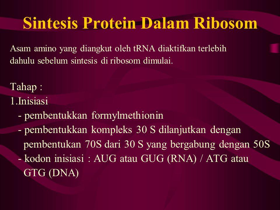 Sintesis Protein Dalam Ribosom