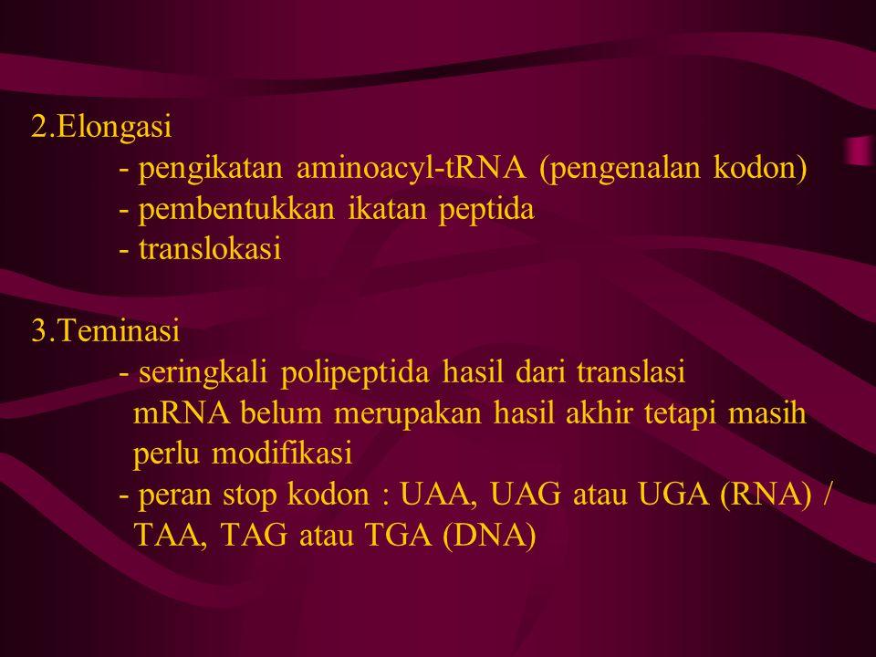 2. Elongasi. - pengikatan aminoacyl-tRNA (pengenalan kodon)