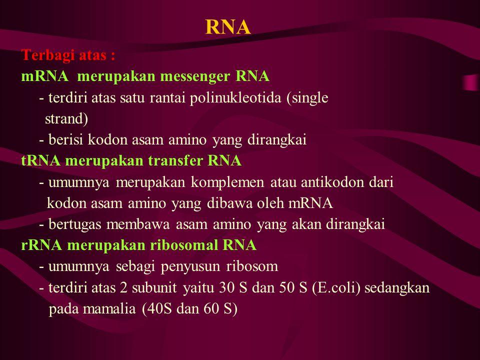 RNA Terbagi atas : mRNA merupakan messenger RNA