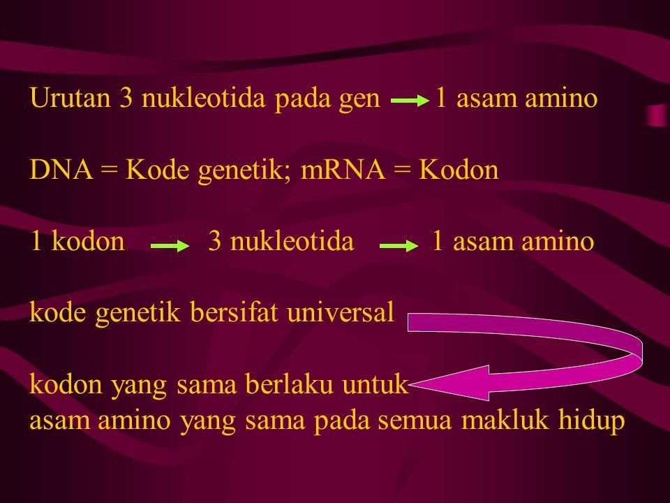 Urutan 3 nukleotida pada gen 1 asam amino DNA = Kode genetik; mRNA = Kodon 1 kodon 3 nukleotida 1 asam amino kode genetik bersifat universal kodon yang sama berlaku untuk asam amino yang sama pada semua makluk hidup