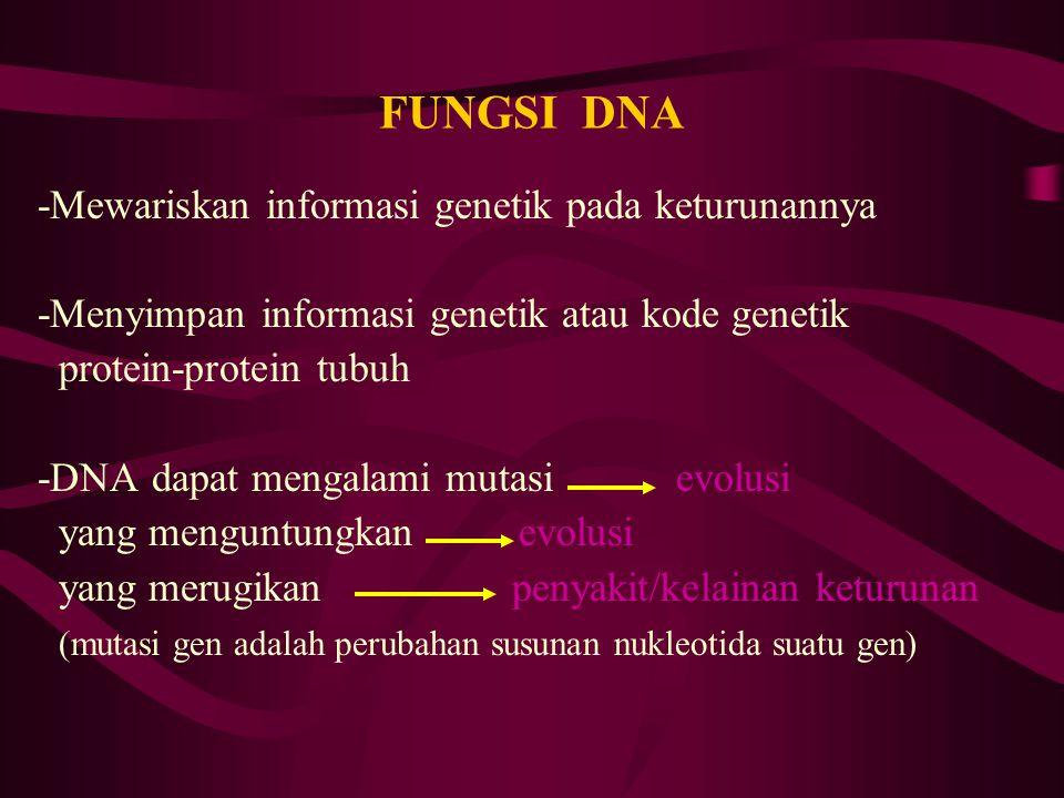 FUNGSI DNA -Mewariskan informasi genetik pada keturunannya