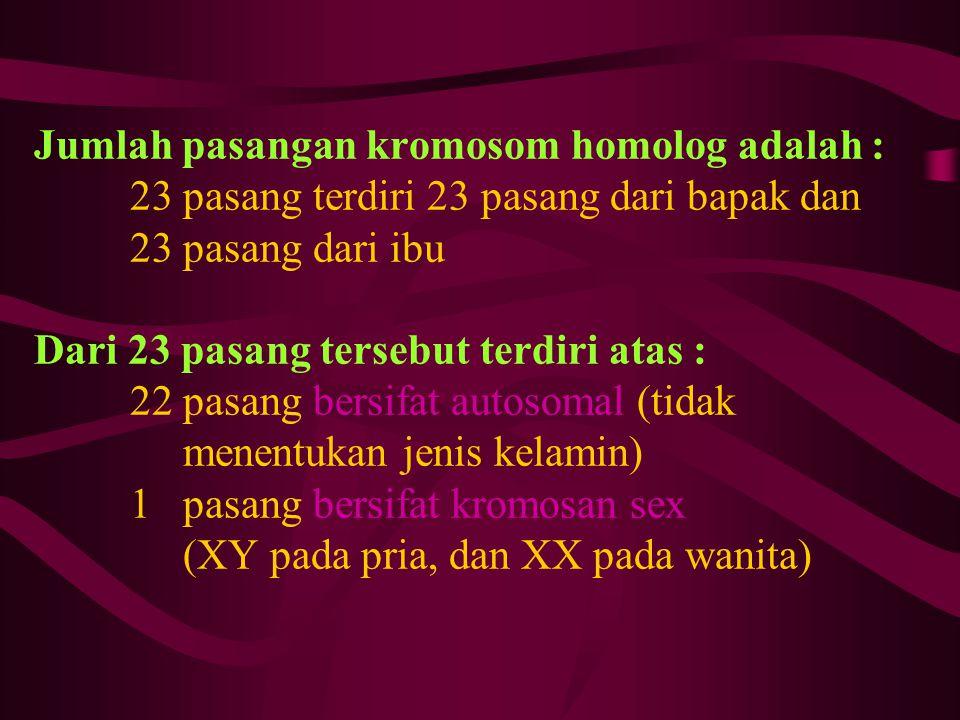 Jumlah pasangan kromosom homolog adalah :