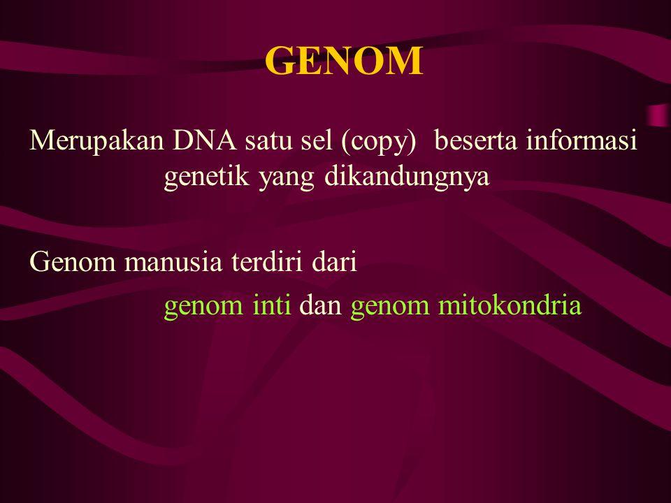 GENOM Merupakan DNA satu sel (copy) beserta informasi genetik yang dikandungnya. Genom manusia terdiri dari.