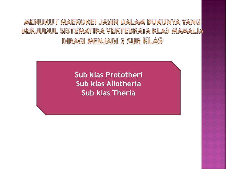 Menurut Maekorei jasin dalam bukunya yang berjudul sistematika vertebrata Klas mamalia dibagi menjadi 3 sub klas