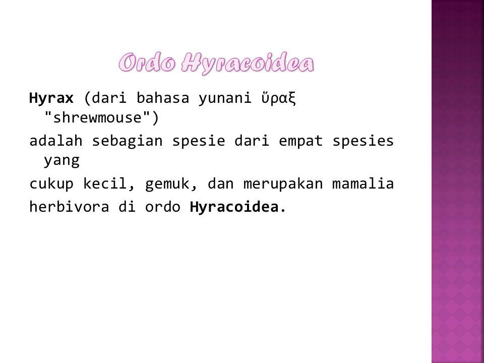 Ordo Hyracoidea