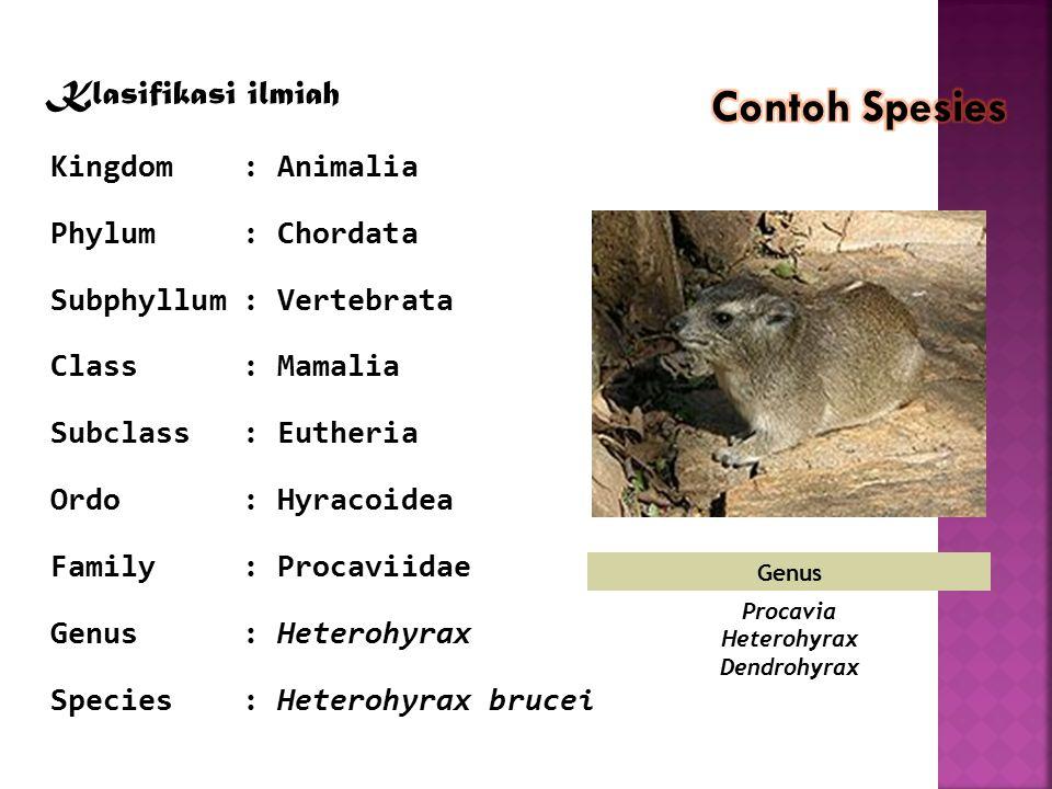 Procavia Heterohyrax Dendrohyrax