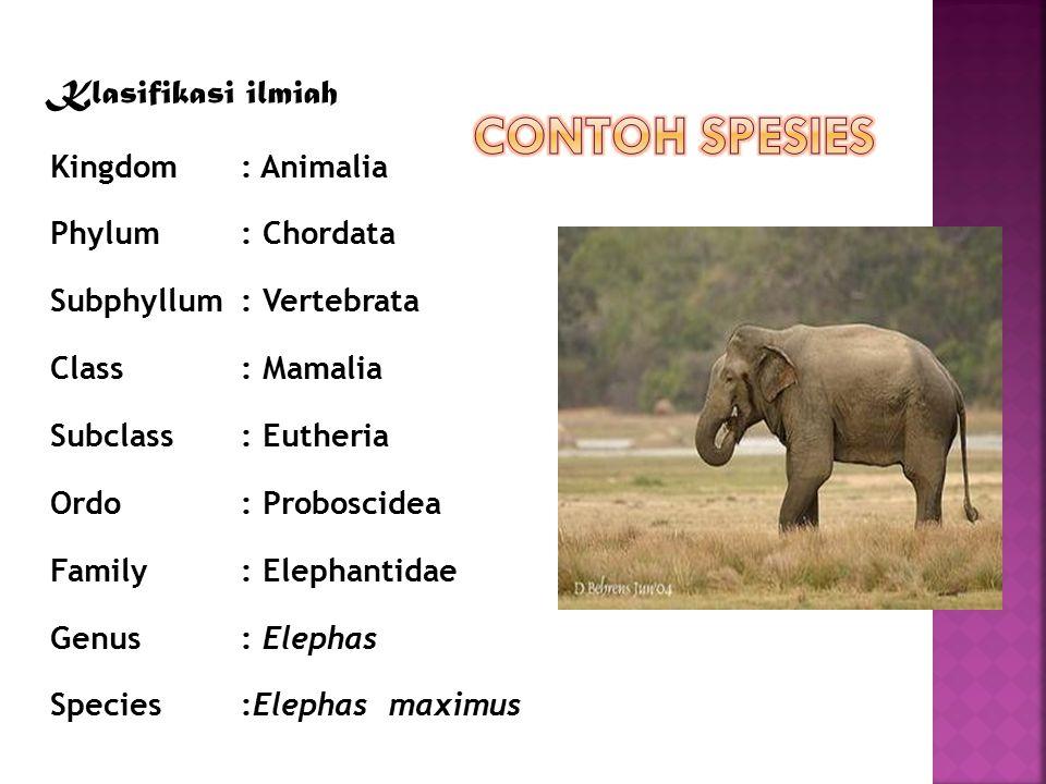 Contoh Spesies Klasifikasi ilmiah Kingdom : Animalia Phylum : Chordata