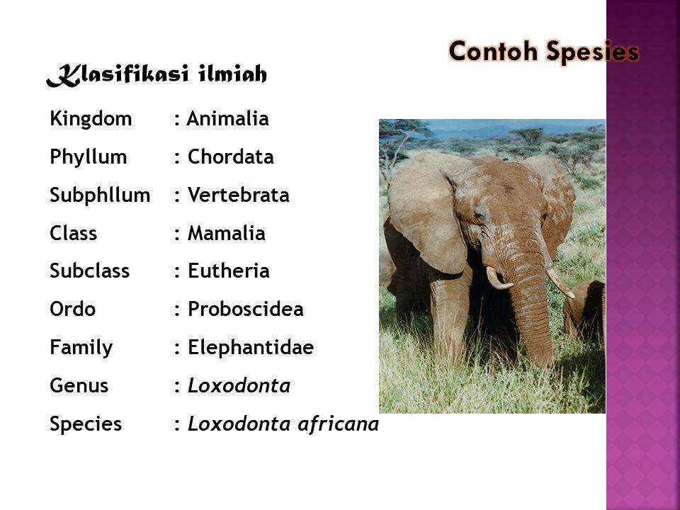 contoh Contoh Spesies Klasifikasi ilmiah Kingdom : Animalia