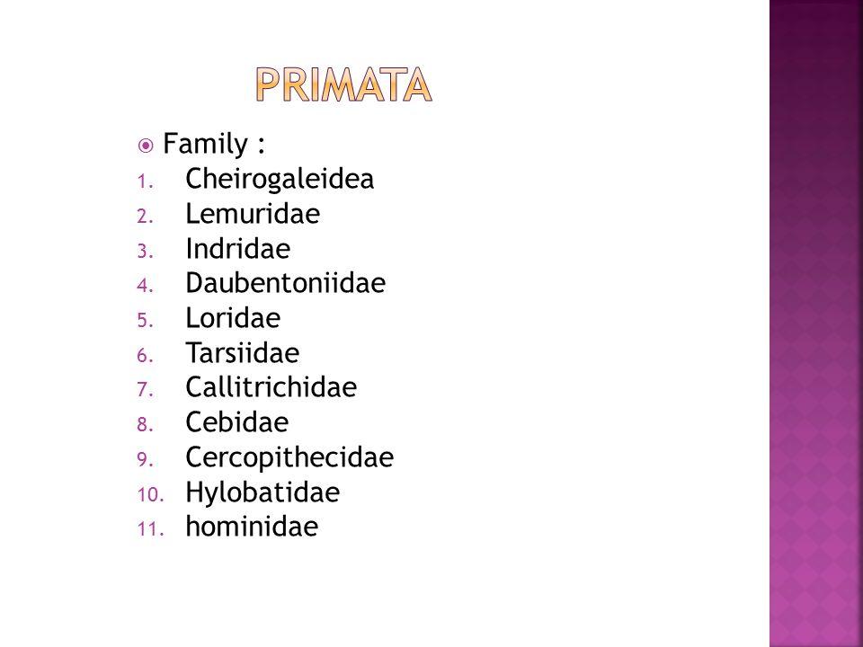 primata Family : Cheirogaleidea Lemuridae Indridae Daubentoniidae