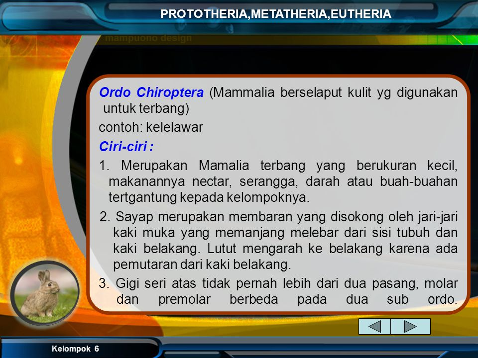 Ordo Chiroptera (Mammalia berselaput kulit yg digunakan untuk terbang)