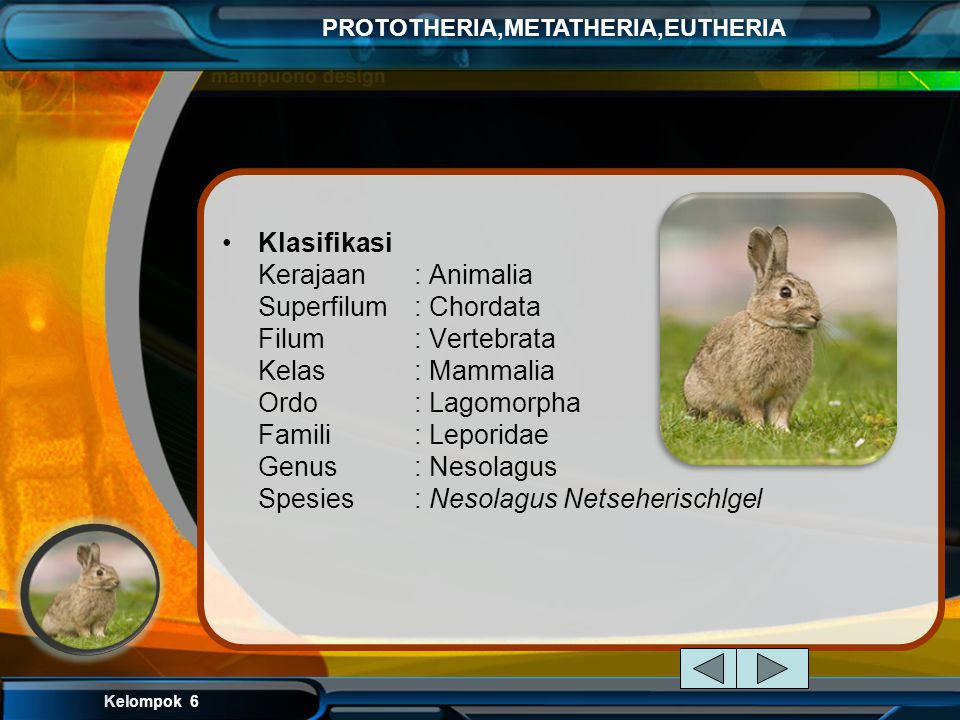 Klasifikasi Kerajaan. : Animalia Superfilum. : Chordata Filum