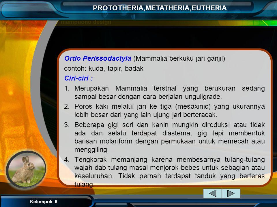 Ordo Perissodactyla (Mammalia berkuku jari ganjil)