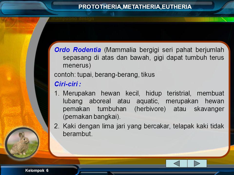 Ordo Rodentia (Mammalia bergigi seri pahat berjumlah sepasang di atas dan bawah, gigi dapat tumbuh terus menerus)
