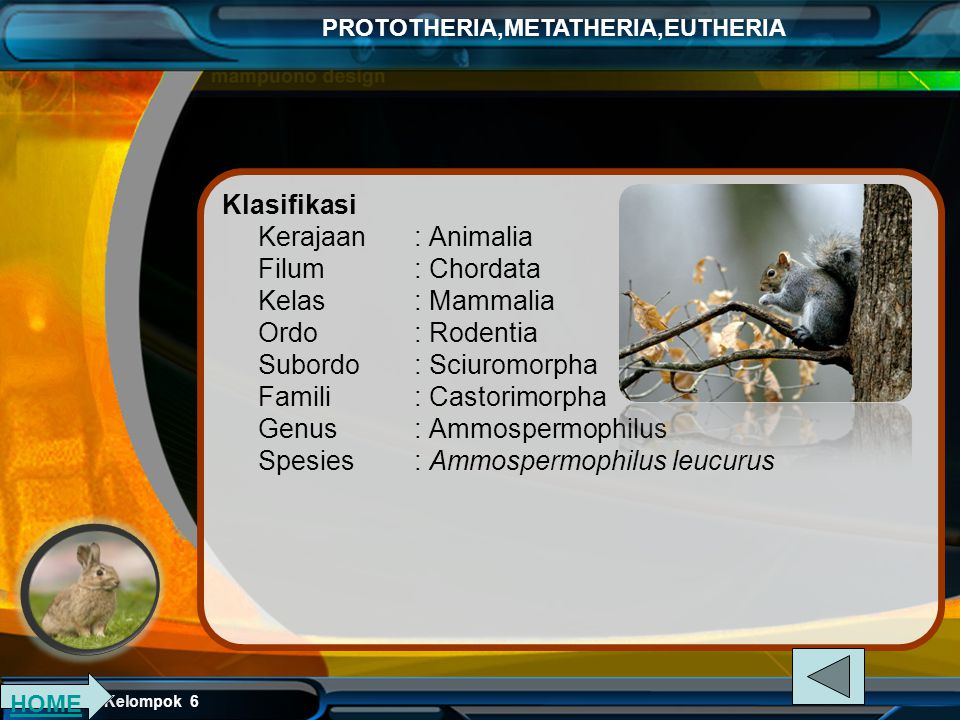 Klasifikasi Kerajaan. : Animalia Filum. : Chordata Kelas