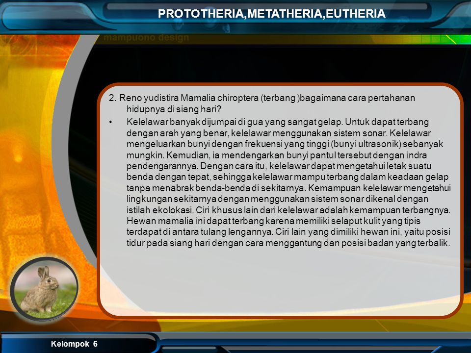 2. Reno yudistira Mamalia chiroptera (terbang )bagaimana cara pertahanan hidupnya di siang hari